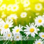 фрески: цветы
